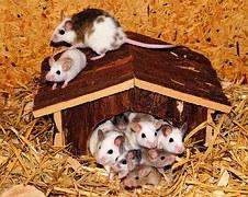 mouse-family-443297__180.jpg