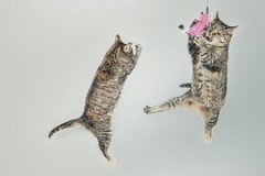 cats-558077__180.jpg