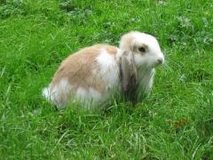 rabbit-55347_640-1.jpg