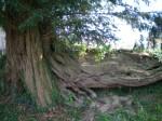 med-tronc-ou-racines-visoflora-3016.jpg