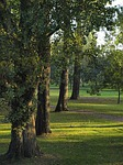 poplars-473295_150.jpg
