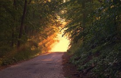 sunlight-166733__180.jpg
